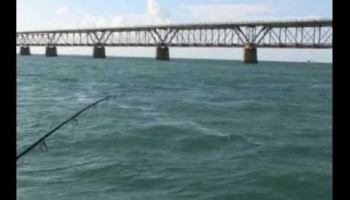 Tarpon Fishing Video #1